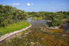 мангровы болотистых низменностей Стоковое Фото