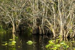Мангровы болотистых низменностей Стоковое Изображение