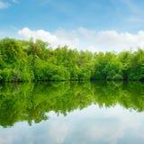 Мангровы и голубое небо стоковое фото