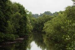 мангровы Стоковые Фото