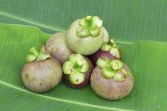 Мангустан на зеленых лист банана Стоковая Фотография RF