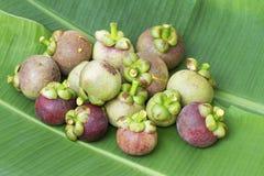 Мангустан на зеленых лист банана Стоковая Фотография