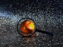 Мандарин в лупе только видимая часть серебристой предпосылки стоковые изображения