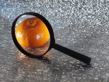 Мандарин в лупе только видимая часть серебристой предпосылки стоковая фотография