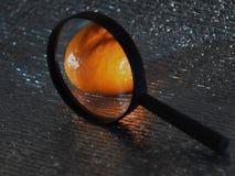 Мандарин в лупе только видимая часть серебристой предпосылки стоковое изображение