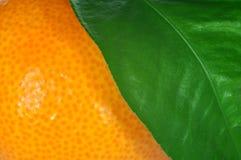 мандарин листьев Стоковые Изображения RF