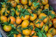 мандарин свежих фруктов Стоковые Изображения
