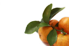 мандарин стоковое изображение rf