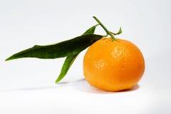 мандарин Стоковые Изображения RF