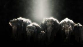 Манипуляция фото цифров слонов в Шри-Ланке Стоковое фото RF