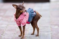 мантия собаки стоковое изображение rf