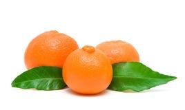 3 мандарин и листь зеленого цвета изолированного на белой предпосылке Стоковые Фото