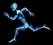 Марафон (человеческая косточка бежит), (рентгеновский снимок всего тела) стоковая фотография
