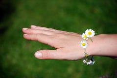 маргаритка браслета цепная Стоковое Фото