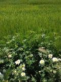 маргаритка и трава стоковое изображение