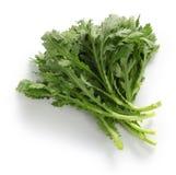 Маргаритка кроны, зеленый цвет suey отбивной котлеты, shungiku, хризантема зеленеет стоковое изображение rf