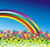 маргаритка предпосылки цветет радуга Стоковое Фото