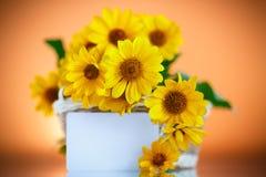 маргаритка пука цветет желтый цвет Стоковые Фотографии RF