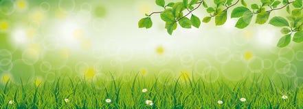 Маргаритка хворостин бука травы весны цветет заголовок иллюстрация штока