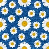 Маргаритка цветет безшовная картина на предпосылке джинсов стоковые фотографии rf