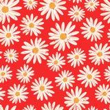 Маргаритка цветет безшовная предпосылка вектора Огорченные белые винтажные цветки стоцвета на красной картине современно бесплатная иллюстрация