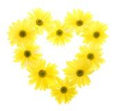маргаритка цветет желтый цвет формы 10 сердца Стоковое Фото