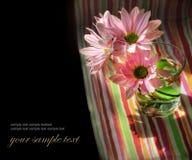 маргаритка цветет стекло стоковая фотография
