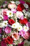 маргаритки, астры, розы Стоковая Фотография