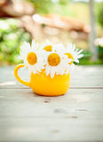 Маргаритки в желтой чашке Стоковые Изображения