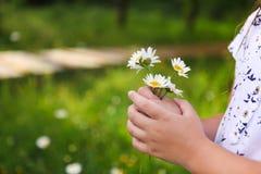 Маргаритки в руках ребенка. Солнечная предпосылка весны. Конец вверх. стоковая фотография