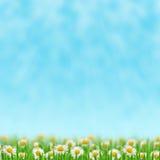 Маргаритки в траве Стоковые Изображения