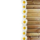 Маргаритки и деревянная граница текстуры Стоковое фото RF