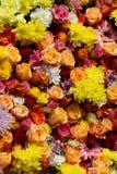 Маргаритки и розы Стоковое Изображение RF