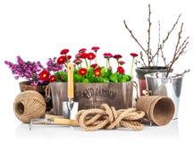 Маргаритки натюрморта весны в деревянных садовых инструментах корзины Стоковая Фотография
