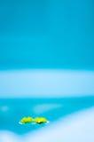 Маргаритки на воде Стоковое Изображение