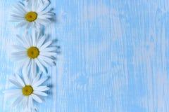Маргаритки на таблице Стоковое Изображение RF