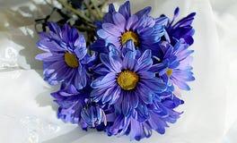 Маргаритки покрашенные синью Стоковое Изображение RF