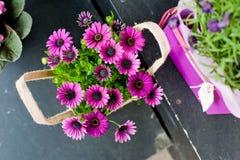 маргаритки пурпуровые Стоковая Фотография