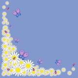 Маргаритки с бабочками и ladybirds иллюстрация вектора