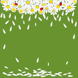 Маргаритки с ladybirds на зеленой предпосылке иллюстрация вектора