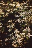 Маргаритки Стоковое Изображение RF