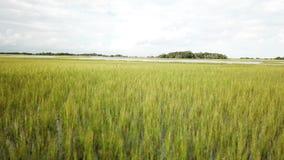 Марина острова лысой головы болота BHI заводи Северной Каролины приливная сток-видео