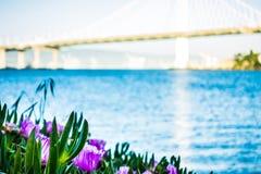 Марина шлюпки около нового моста залива oakland водя к халифу oakland Стоковое Изображение RF