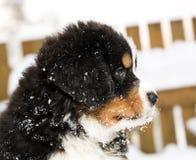 Марионетка собаки смотря любознательн другой способ Стоковые Фотографии RF