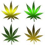 марихуана листьев Стоковая Фотография RF