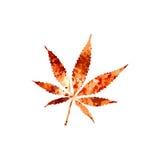 марихуана Стоковое Изображение RF