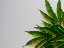марихуана Стоковое Изображение