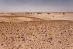 Марокканец Сахара - каменистая часть стоковые фото