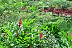 Мартиника, живописный город румян Morne в Вест-Индиях стоковая фотография