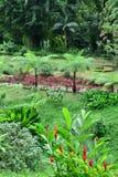 Мартиника, живописный город румян Morne в Вест-Индиях стоковые изображения